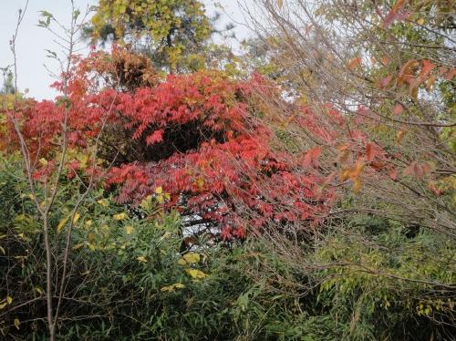 うみべの森の冬景色   by  (TATE-misaki)_c0108460_14254648.jpg