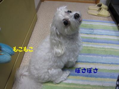 f0145192_16161652.jpg