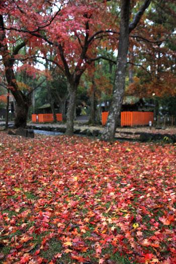 紅葉最終 上賀茂神社_e0048413_2281427.jpg
