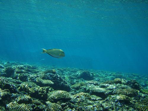 12月10日最高の海で恐怖体験(><)!_c0070933_22111799.jpg