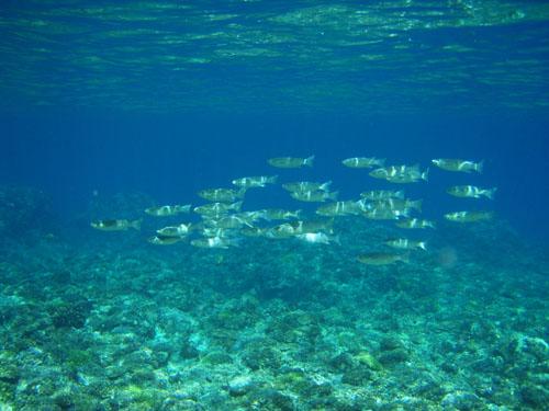 12月10日最高の海で恐怖体験(><)!_c0070933_22113075.jpg