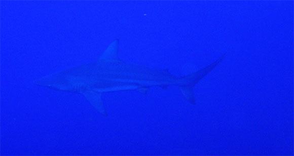 12月10日最高の海で恐怖体験(><)!_c0070933_2271656.jpg