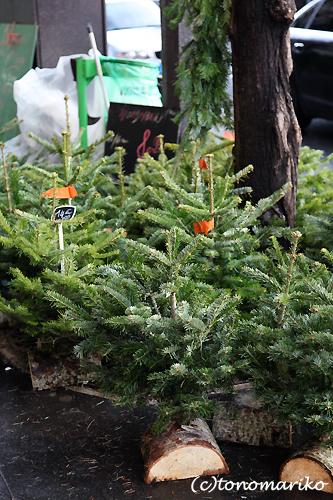 クリスマスツリーの夢の夢_c0024345_2185528.jpg