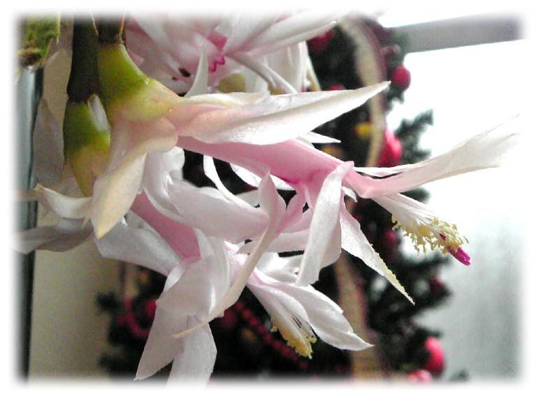 咲きました、咲きました。_e0116563_16131815.jpg