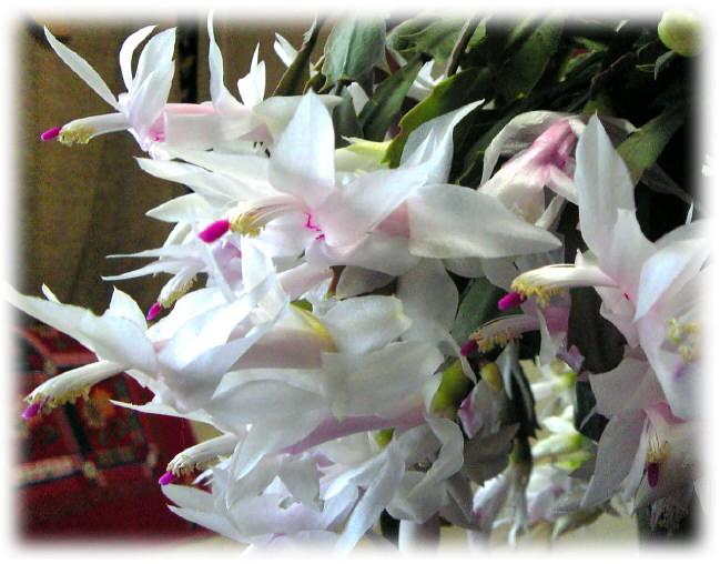 咲きました、咲きました。_e0116563_16135628.jpg