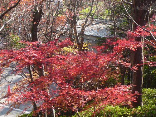 鈴虫寺&大根焚き_d0078486_7224263.jpg