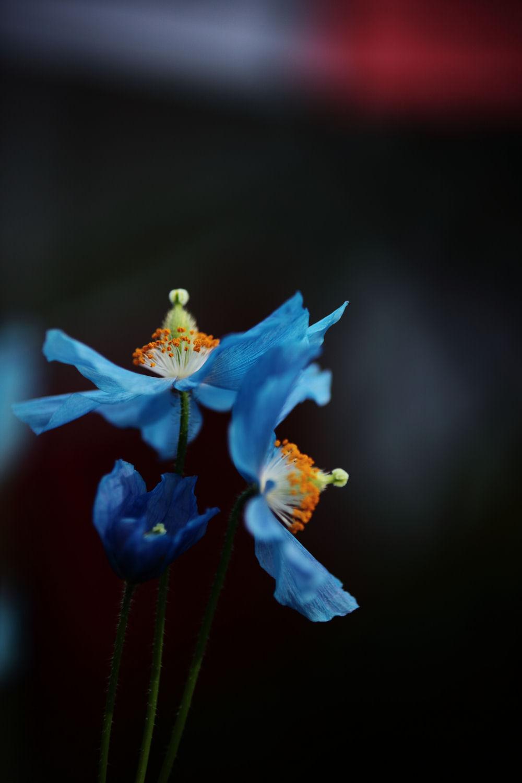 Happiness Blue_f0195893_20353375.jpg