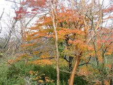 紅葉のころのポーラ美術館 ― エントランスまわり_d0138618_12485215.jpg