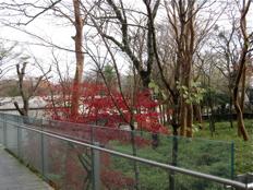 紅葉のころのポーラ美術館 ― エントランスまわり_d0138618_12494381.jpg