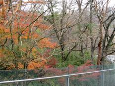 紅葉のころのポーラ美術館 ― エントランスまわり_d0138618_124944.jpg