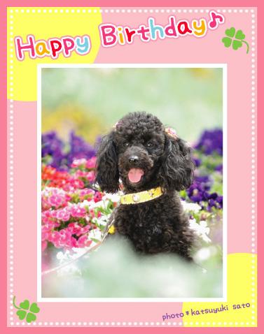 マロンちゃん、お誕生日おめでとう♪_d0102523_10562331.jpg