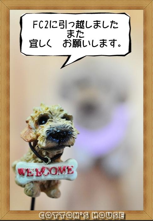 b0187161_14291724.jpg