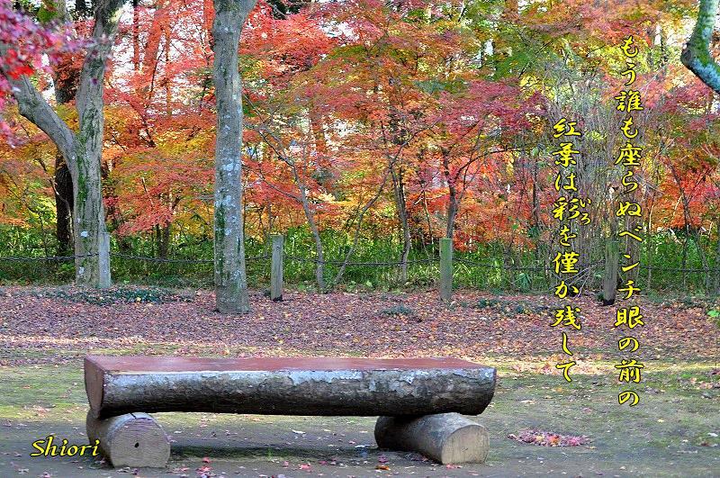 往く季節に・・・<歌>_c0187781_9553831.jpg