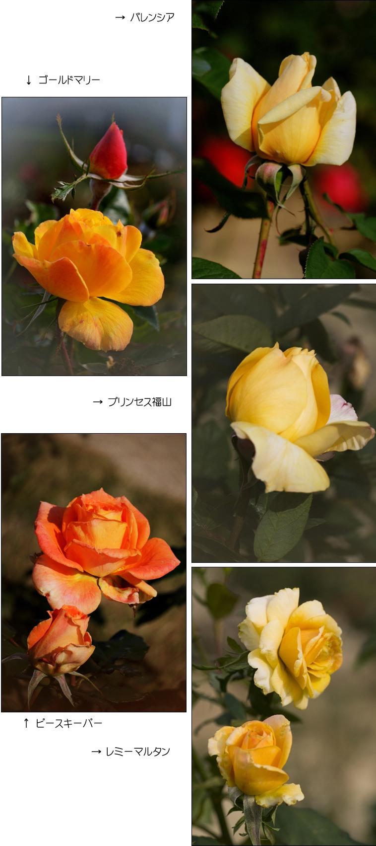 f0093285_1752675.jpg