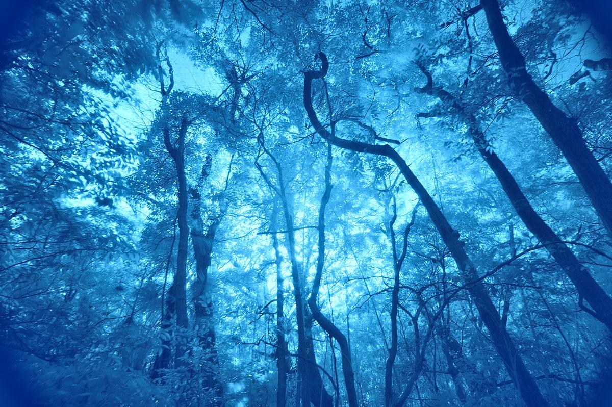 Blue Forest_a0059621_17392040.jpg