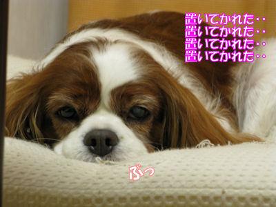 b0185323_22331612.jpg