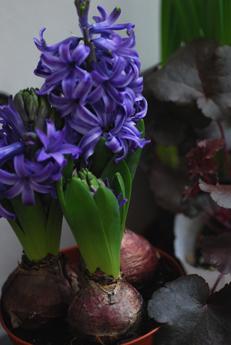 春のお花をラッピング_f0179528_2350159.jpg