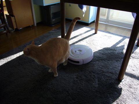 猫飼いのお掃除ロボット・ルンバ レビューそのニ_e0058443_23505783.jpg