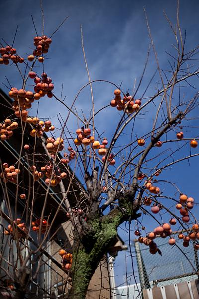 2009/12/13 大井町から_b0171364_1057462.jpg