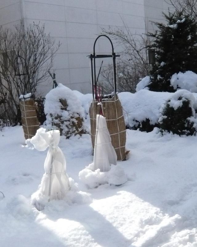 根雪になるでしょう。_f0135269_12442985.jpg