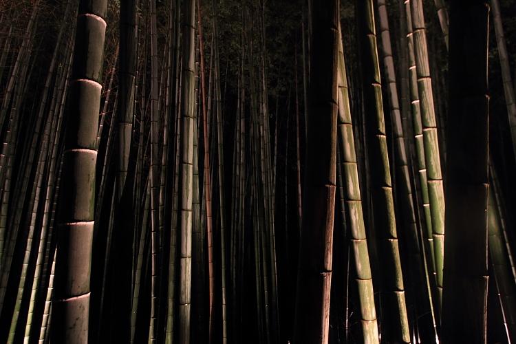 嵐山花灯路 -嵯峨野竹林-_e0051888_2121092.jpg