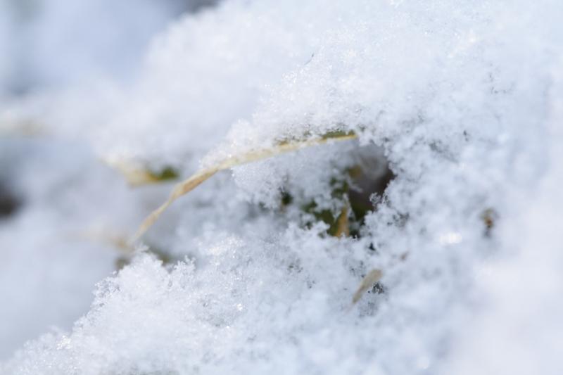 軽い雪_f0091207_15145982.jpg