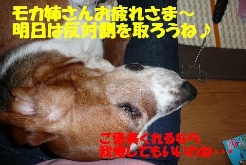 f0121712_11485258.jpg