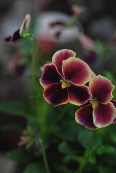 春のお花をラッピング_f0179528_04414.jpg