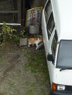 視線の先猫 のぇる編。_a0143140_1549448.jpg