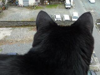視線の先猫 のぇる編。_a0143140_15551374.jpg