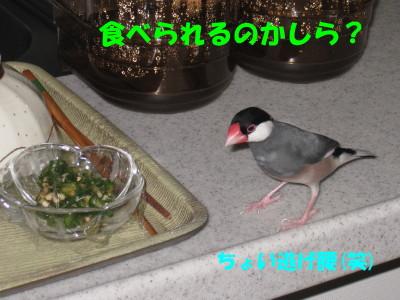 b0158061_2174372.jpg