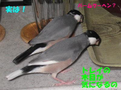 b0158061_21893.jpg