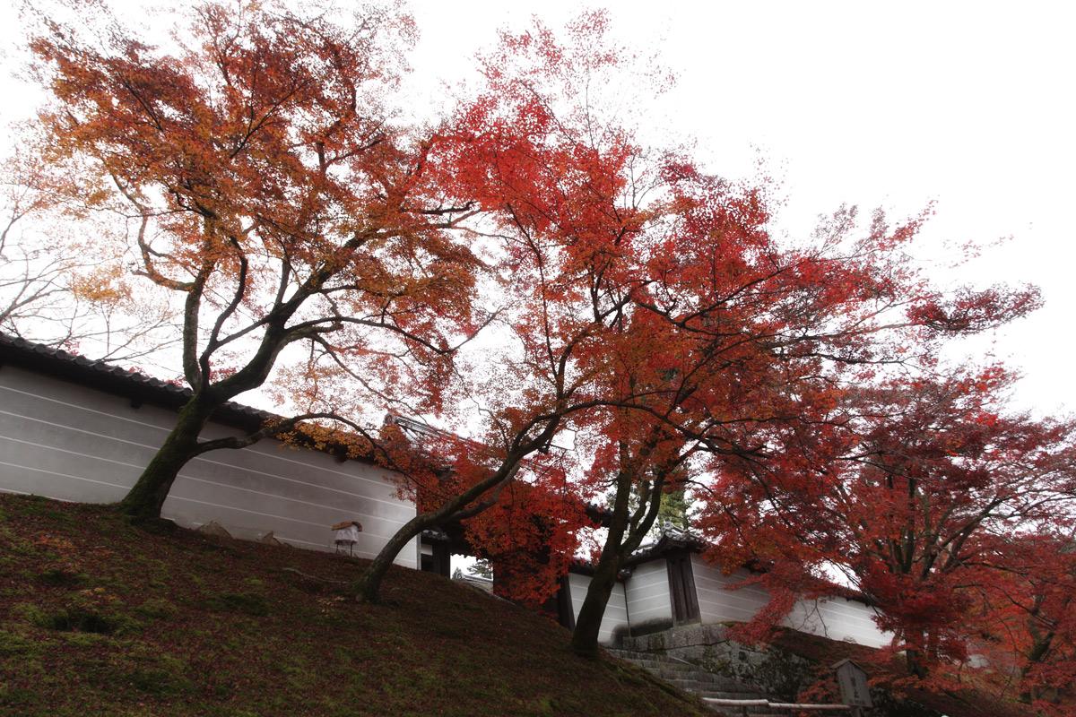 京都スナップ  8_f0021869_21347100.jpg