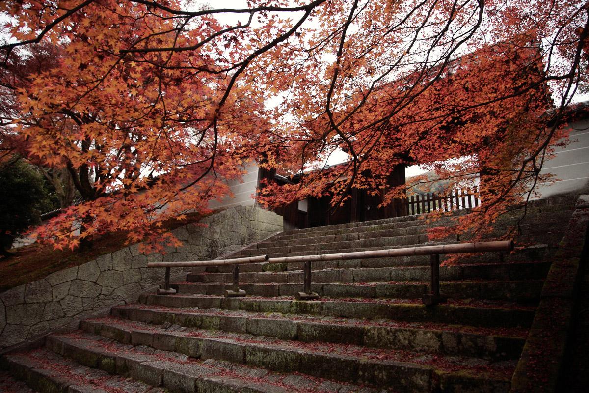 京都スナップ  8_f0021869_2142867.jpg