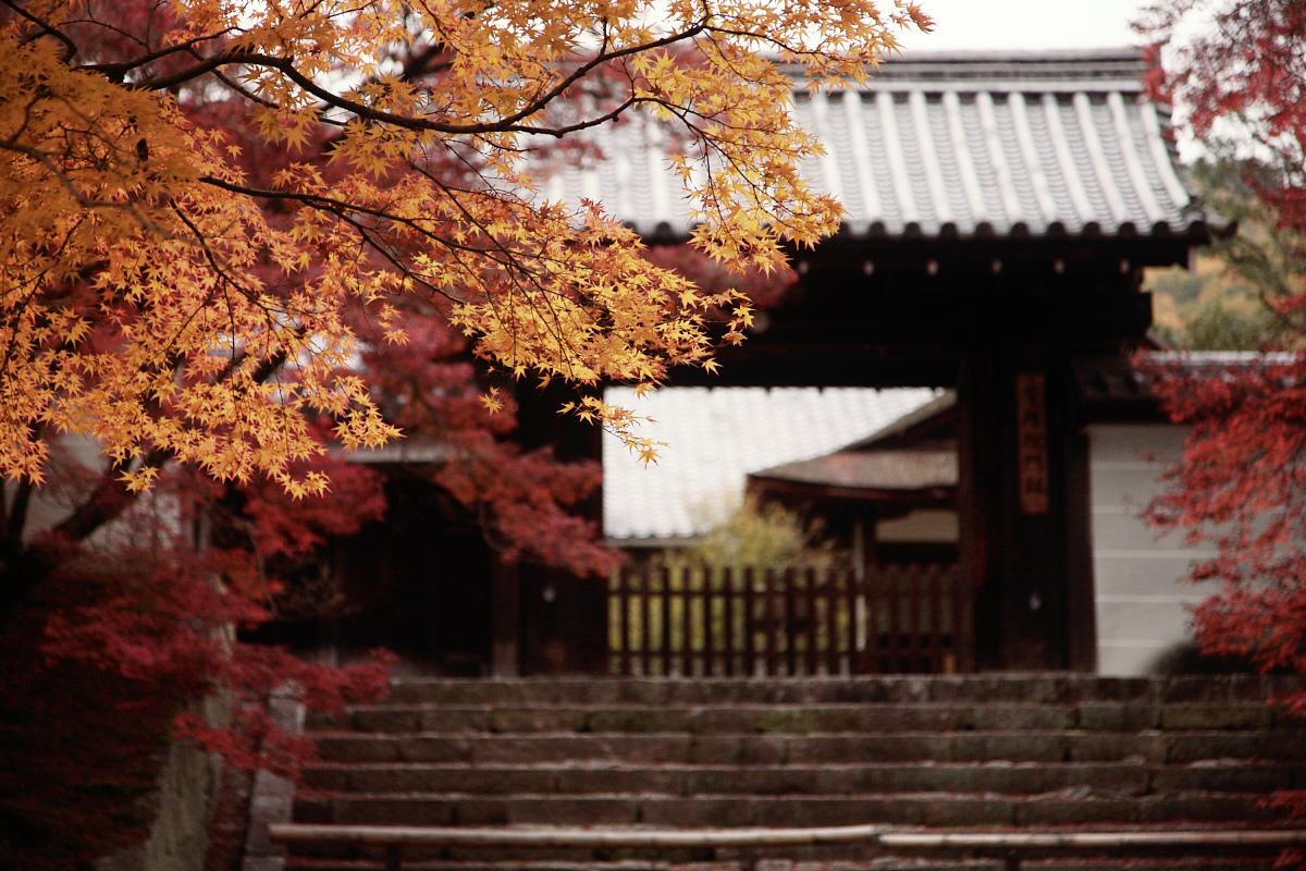 京都スナップ  8_f0021869_214763.jpg