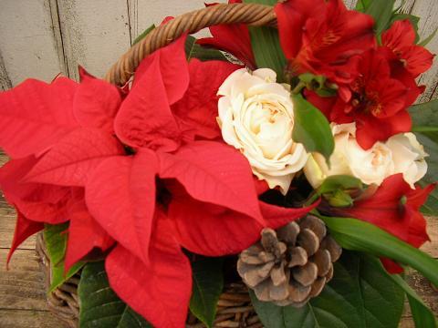 贈り物のお花~ポインセチア_c0033678_19143365.jpg