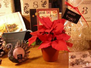 贈り物のお花~ポインセチア_c0033678_19175213.jpg