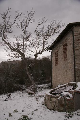 初雪が降りました_f0106597_18254760.jpg