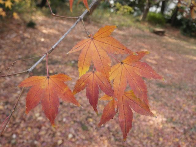 葉っぱの切れ込みを数えてみると_b0049307_15174556.jpg