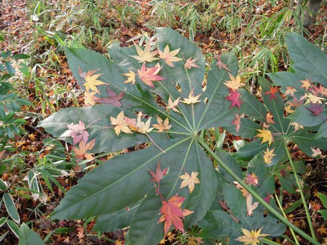 葉っぱの切れ込みを数えてみると_b0049307_1582044.jpg