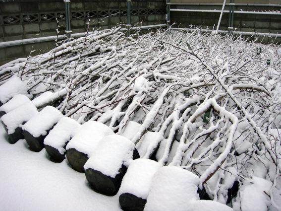 積雪あり_f0160407_747821.jpg