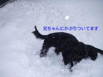 キタ〜!!_b0091153_136242.jpg