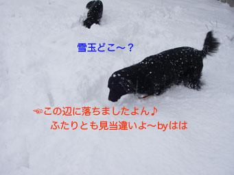 キタ〜!!_b0091153_1365270.jpg