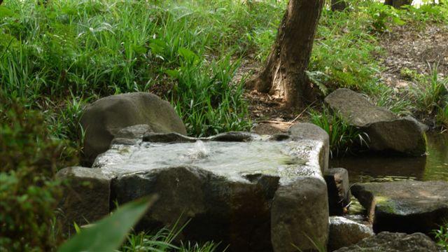 名主の滝公園_b0175688_23313558.jpg