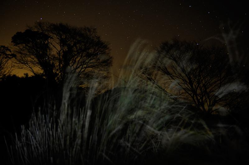 流星群の夜_f0144394_4411290.jpg