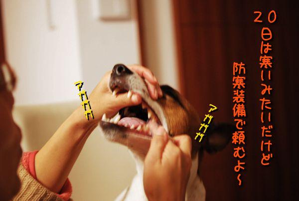 f0203612_0321084.jpg