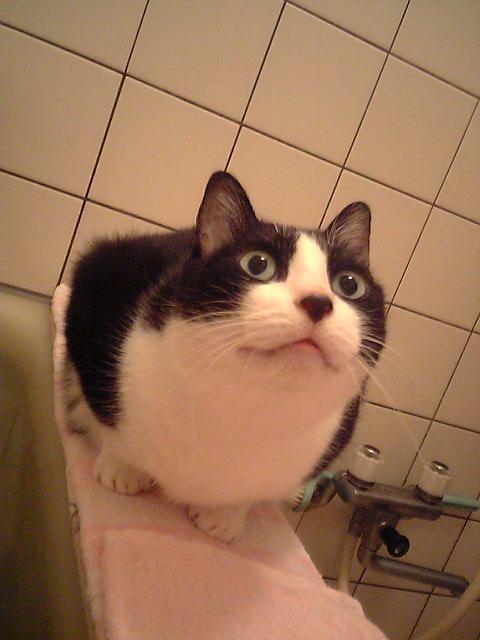 お風呂猫 空のぇる編。_a0143140_21283695.jpg