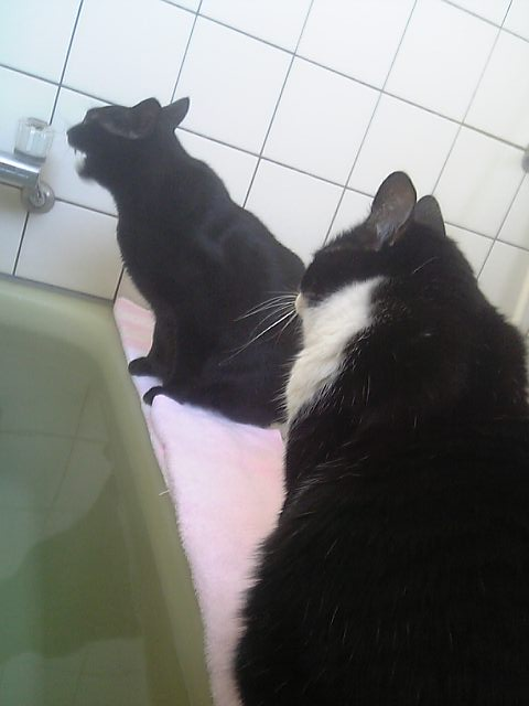 お風呂猫 空のぇる編。_a0143140_21293417.jpg