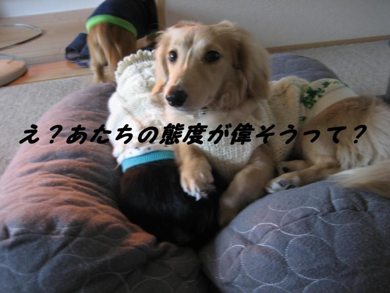 b0160052_16352694.jpg