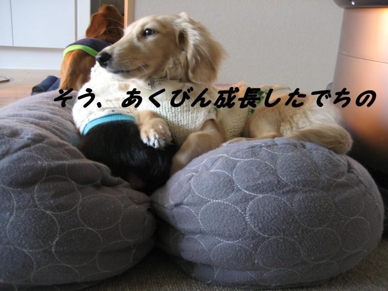 b0160052_16353484.jpg
